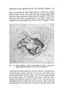 Strana 91
