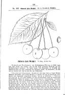 Strana 531