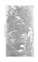 Strana 384